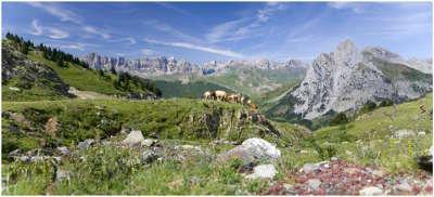 Parc naturel regional des pyrenees catalanes guide du tourisme des pyrenees orientales languedoc roussillon