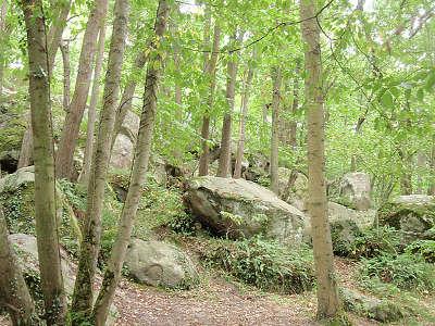 Parc naturel regional du gatinais francais fontainebleau guide du tourisme de l ile de france