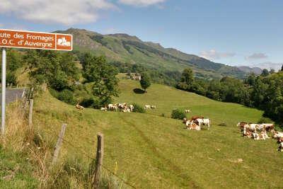 Route des fromages d auvergne