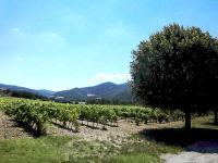 Vignes et tilleuls dans les baronnies dome et hautes alpes parc naturel regional
