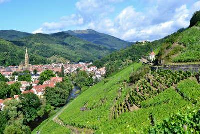 Vignoble en terrasse route des vins d alsace guide du tourisme de l alsace