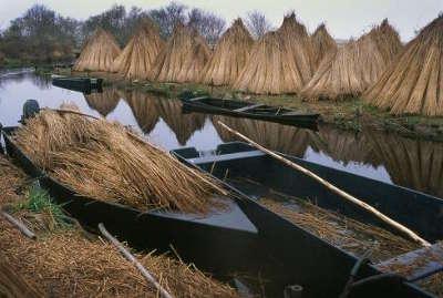 Village de kerhinet dans la briere parc regional de la briere loire atlantique pays de la loire