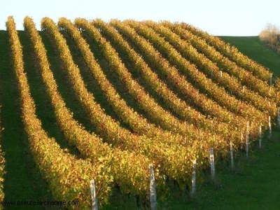Vix vignobles routes touristiques de vendee du tourisme du pays de la loire