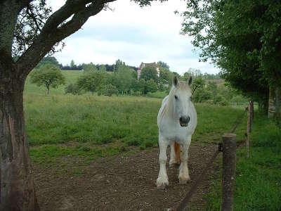 Vue du domaine de courboyer avec au premier plan un cheval percheron parc naturel regional de la perche guide touristique