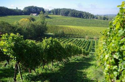 Vue sur les vignes de bergerac la route des vins de bergerac guide du tourisme de la dordogne aquitaine
