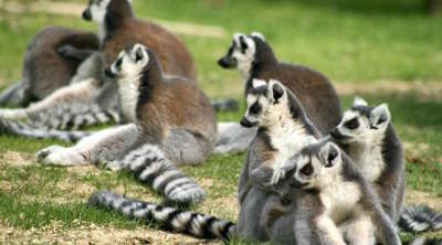 Zoo de la bourbansais les routes touristiques dans l ille et vilaine guide du tourisme en bretagne
