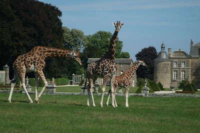 Zoo de la bourbansais routes touristiques dans l ille et vilaine guide du tourisme en bretagne